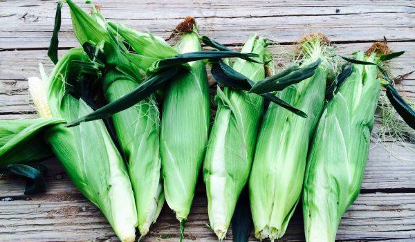Warner Farm corn