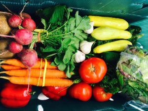 Warner Farm CSA sign up