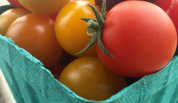 Warner Farm tomatoes