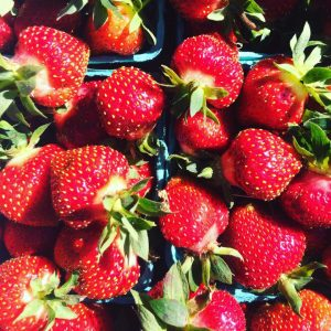 Warner Farm Strawberry Fest