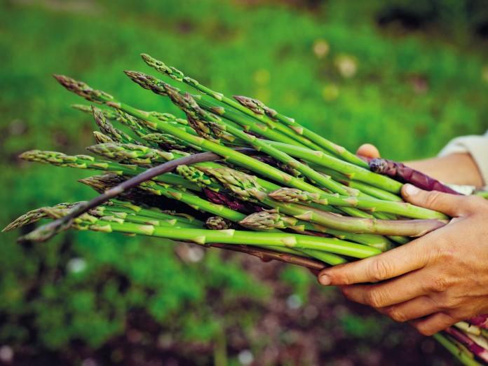 Asparagus-recipes